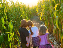 Giant Corn Maze - Virginia