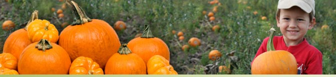 Pick-Your-Own Pumpkins at Green Hand Farm Park
